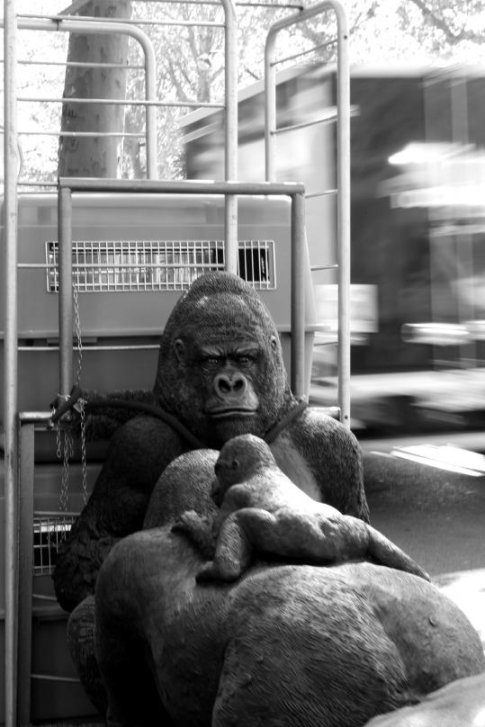 gorille paris