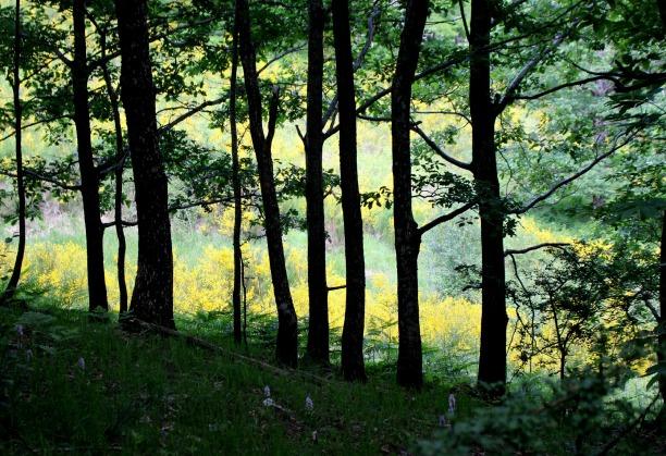 orchidée et forêt