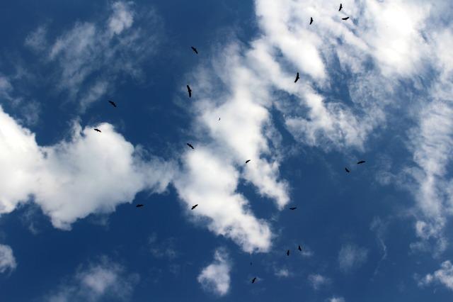 vautours en ombre chinoise