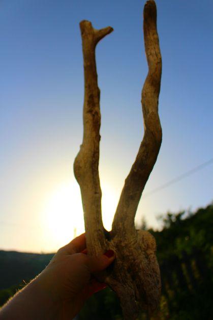 bois de cerf woodhappen
