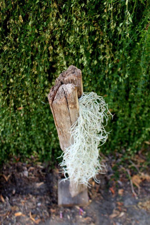sculpture woodhappen,bois et tillandsia