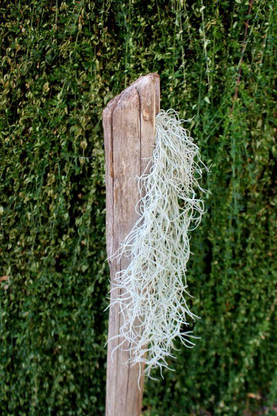 tillandsia et composition bois, woodhappen