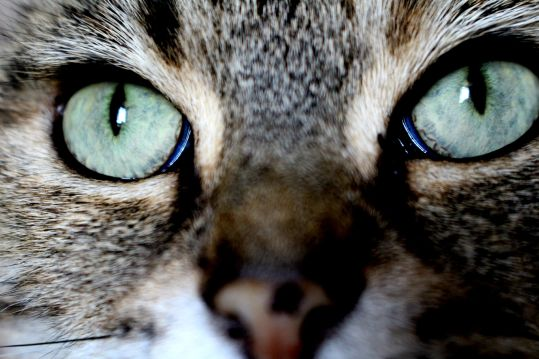 cat'seyes