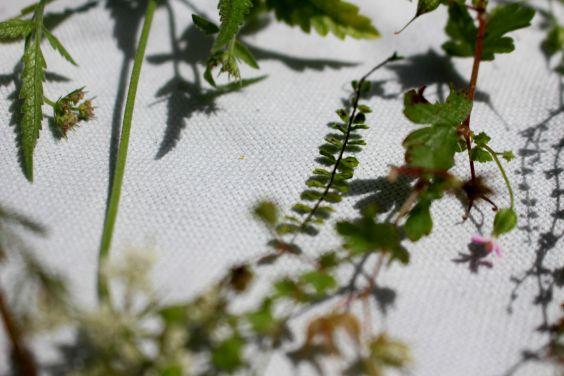 impression de plantes sur tissus