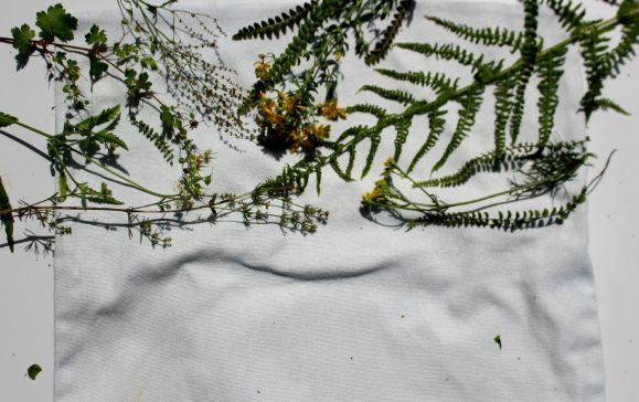 imprimé des plantes