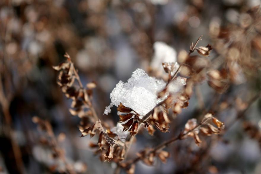 première neige macro