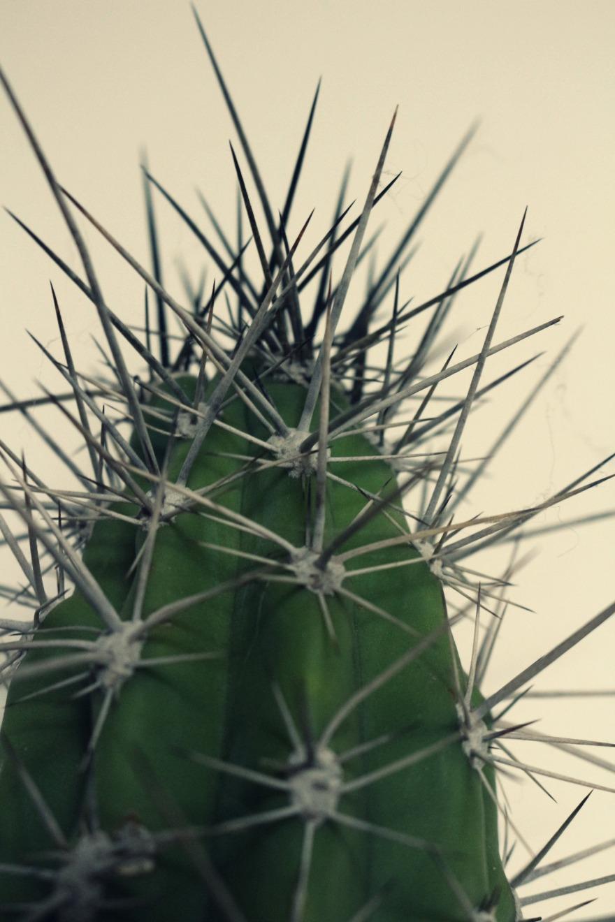 cactus woodhappen