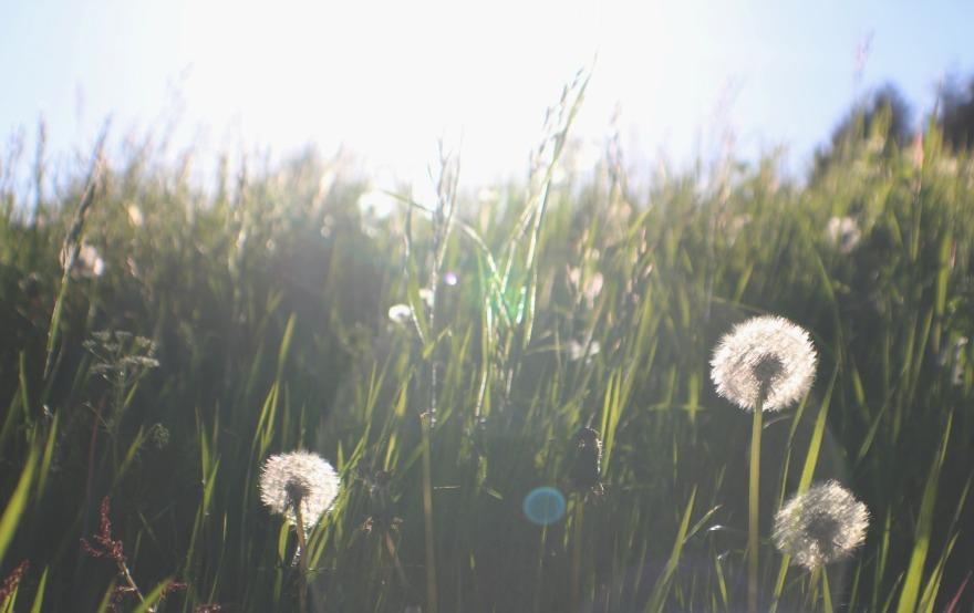 champs coucher de soleil.jpg